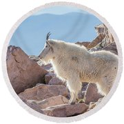 Mountain Goat Takes In Its High Altitude Home Round Beach Towel