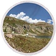 Mountain Goats At Columbine Lake - Weminuche Wilderness - Colorado Round Beach Towel