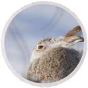 Mountain Hare - Scottish Highlands  #10 Round Beach Towel