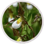 Mountain Lady Slippers Up Close Round Beach Towel