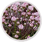 Mountain Laurel Bush Round Beach Towel