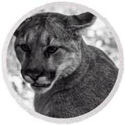 Mountain Lion Bw Round Beach Towel
