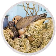 Mourning Dove And Chick Round Beach Towel