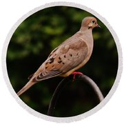 Good Morning Mourning Dove  Round Beach Towel