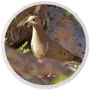 Mourning Dove On The Hillside Round Beach Towel