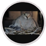 Mourning Dove With One Of Two Chicks Round Beach Towel
