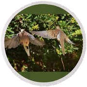 Mourning Doves Wings  Round Beach Towel