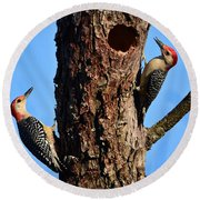Red Bellied Woodpeckers Round Beach Towel