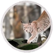 Moving Through The Forest Round Beach Towel