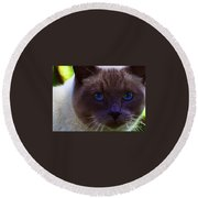 Mr. Blue Eyes Round Beach Towel