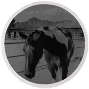 Mr Ed In Black And White Round Beach Towel