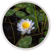Mudd Pond Water Lily Round Beach Towel