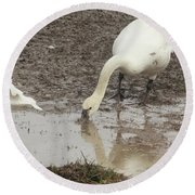 Muddy Tundra Swan Round Beach Towel