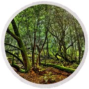 Muir Woods Rejuvenation Round Beach Towel