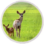Mule Deer Doe And Fawn Looking Back Over Their Shoulders Round Beach Towel