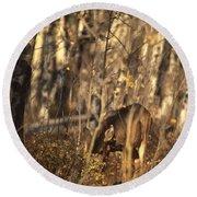 Mule Deer In Aspen Thicket Round Beach Towel
