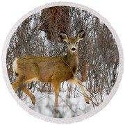 Mule Deer Portrait In Heavy Snow Round Beach Towel