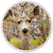 Mule Deer Portrait In The Pike National Forest Round Beach Towel