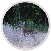 Mule Deer - Sinkyone Wilderness Round Beach Towel