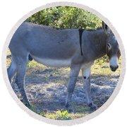 Mule In The Pasture Round Beach Towel