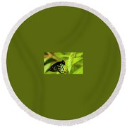 Multi Colored Buttrfly Round Beach Towel