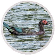 Muscovey Duck Round Beach Towel