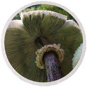 Mushroom Down Under  Round Beach Towel