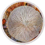 Mushroom On Fall Floor Round Beach Towel