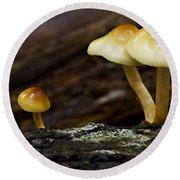 Mushroom Trio Round Beach Towel