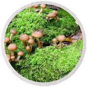 Mushrooms And Moss 2 Round Beach Towel