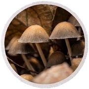 Mushrooms Hidden Between The Leaves Round Beach Towel