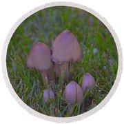 Mushrooms In Grass Round Beach Towel
