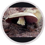 Mushrooms Under Firs Round Beach Towel