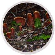 Mushrooms,log And Ferns Round Beach Towel