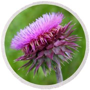 Musk Thistle Blooming Round Beach Towel
