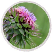 Musk Thistle In Bloom Round Beach Towel