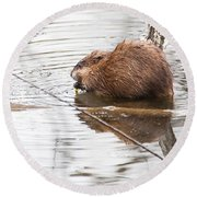 Muskrat Spring Meal Round Beach Towel