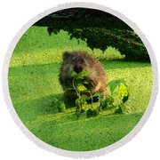 Muskrat Susie Or Muskrat Sam Round Beach Towel