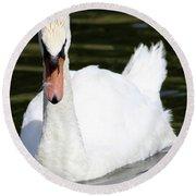Mute Swan Feathers Of Lake Junaluska North Carolina  Round Beach Towel
