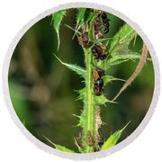 Mutualism - Ants And Treehoppers Round Beach Towel