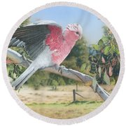 My Country - Galah Round Beach Towel