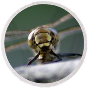 My Friend Vince The Dragonfly Round Beach Towel