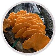 Myakka Fungi Round Beach Towel