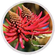 Naked Coral Tree Flower Round Beach Towel by Mariola Bitner