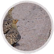 Namaqua Sandgrouse Round Beach Towel