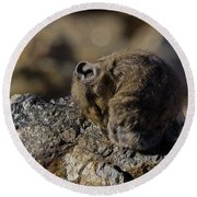 Napping American Pika - 4694 Round Beach Towel