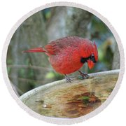 Narcissist Cardinal Round Beach Towel