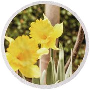Narcissus Of A Plant Round Beach Towel
