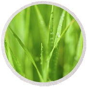 Native Prairie Grasses Round Beach Towel