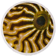Natural Abstract Round Beach Towel
